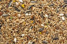Bird Seed For Parrots