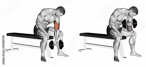 Concentrated bending arms with a dumbbell. Exercising for bodybuilding. Target muscles are marked in red. Initial and final steps. 3D illustration