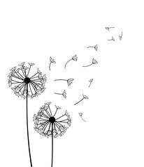 Fototapeta Dandelion vector