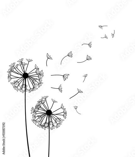 Dandelion vector Canvas Print