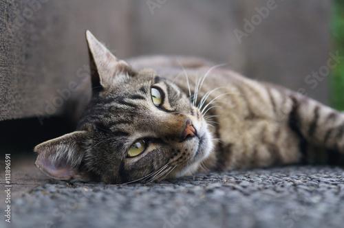 Spoed Foto op Canvas Canada 猫