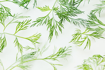 FototapetaGreen dill on a white background. Pattern. Ornament. Food background