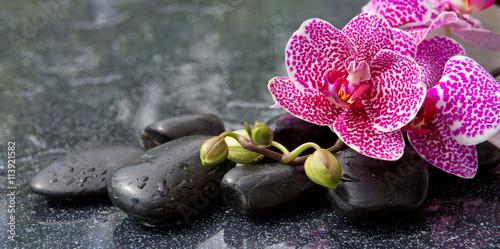 rozowa-orchidea-odizolowywajaca-na-czarnym-tle