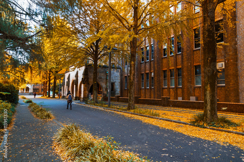 Recess Fitting Tokyo Row of Ginkgo Tree at Tokyo University in Autumn