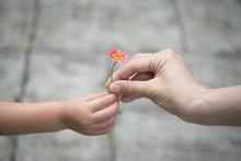 ピンクの花を手渡す親...
