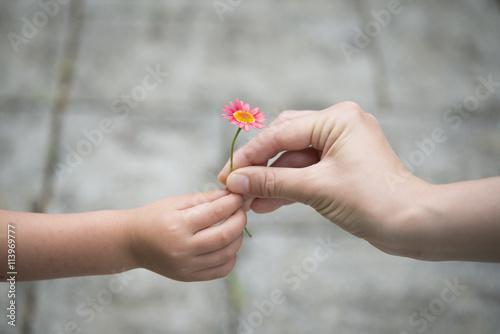 Fotografia ピンクの花を手渡す親子の手