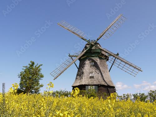 Papiers peints Moulins Windmühle im Rapsfeld in Ostholstein