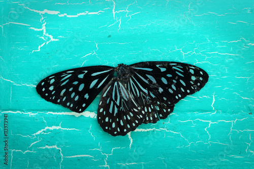 Foto op Aluminium Vlinders in Grunge colorful butterfly on grunge background.