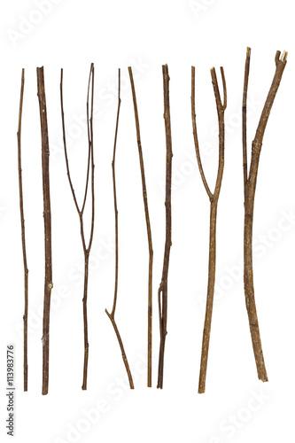 Obraz na płótnie twig