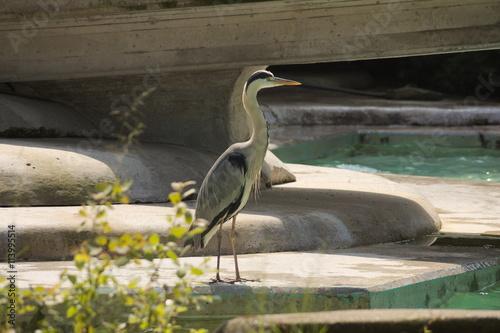 Photo sur Aluminium Nature reiger wacht op vis