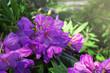 Beautiful purple flowers in botanical garden