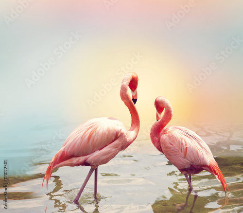 obraz dibond Two Flamingos near water