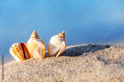 obraz lub plakat sand beach sea shell