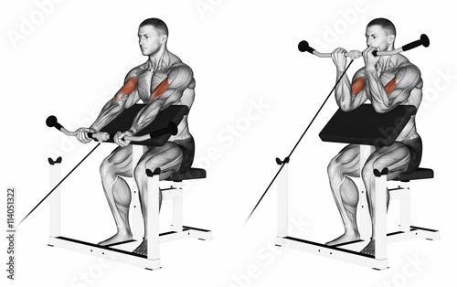 Aluminium Prints kids room Cable peacher curl. Exercising for bodybuilding. Target muscles are marked in red. Initial and final steps. 3D illustration
