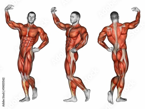 Projection of the human body. Apollo pose. Showing all muscle groups ...