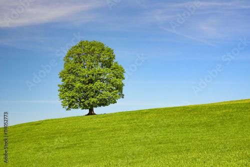 pojedyncze-drzewo-na-lace
