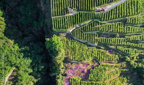 Fotografía  Valtellina (IT) - Lavorazione dei terrazzamenti coltivati a vigneto - vista aere