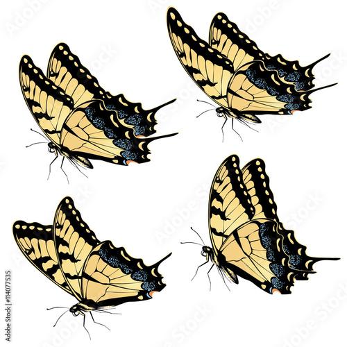 Obraz na plátně Tiger Swallowtail Butterfly