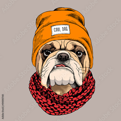 bulldog-portrait-in-a-hipster-hat-and-with-knitted-scarf-vector-illustration