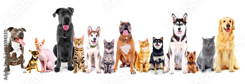 Foto op Aluminium Kat Group of sitting cats and dogs, isolated on white