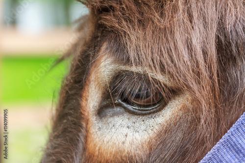 close up of donkey's eye Fototapete