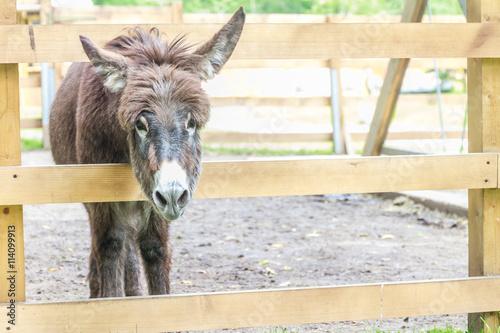 Photo  donkey on farm behind wooden fence