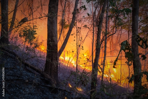 Printed kitchen splashbacks Australia Forest fires are spreading in the wild.