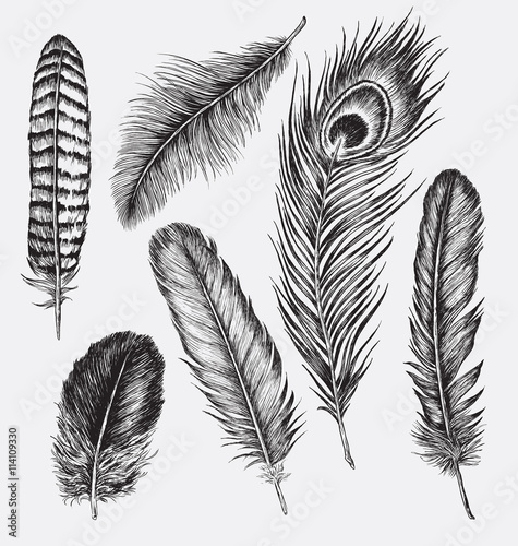 Set of Hand Drawn Feathers