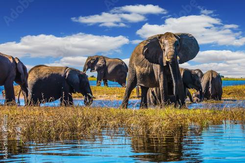 Naklejki słoń  herd-of-elephants-come-to-drink