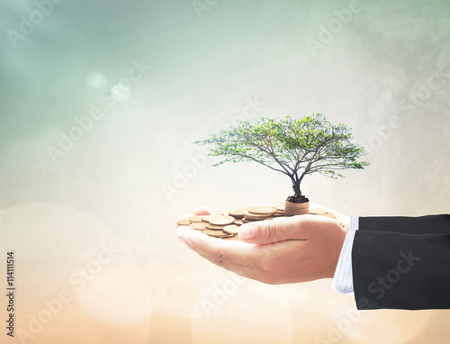 Fotografía  Investment concept: Businessman hand holding stacks of golden coins and big tree
