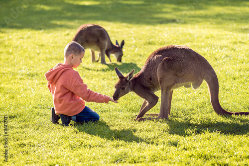 Foto op Canvas Kangoeroe Boy feeding kangaroo