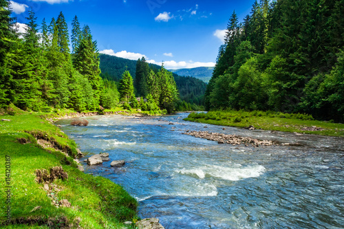 Montage in der Fensternische Fluss Mountain river in spruce forest