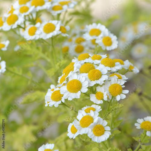 fototapeta na drzwi i meble Blumen 603