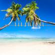 pinces à linge sur cocotiers penchés, plage des îles, anse Royale, Seychelles