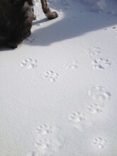 Cropped Image Of Dog And Paw Prints In Snow