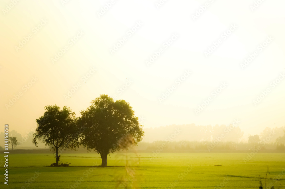 trees in field beautiful green color flare sunny light