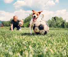 Man Play With Dog On The Green Meadow