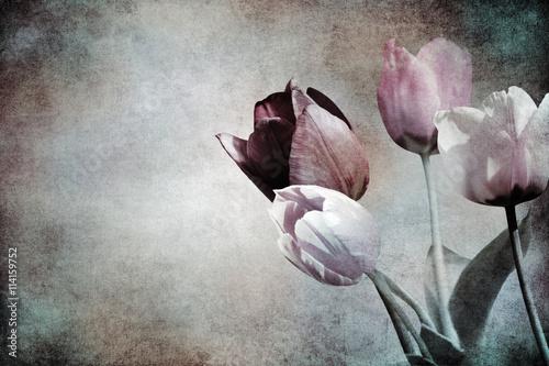 Obrazy wieloczęściowe piękne tulipany
