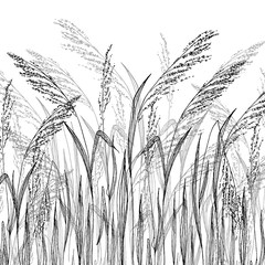 Fototapeta Woda Krople Vector grass sketch, vector illustration with wild herbs