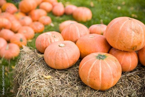 Pile Of Cute Pumpkins At Pumpkin Patch Seasonal Pumpkins
