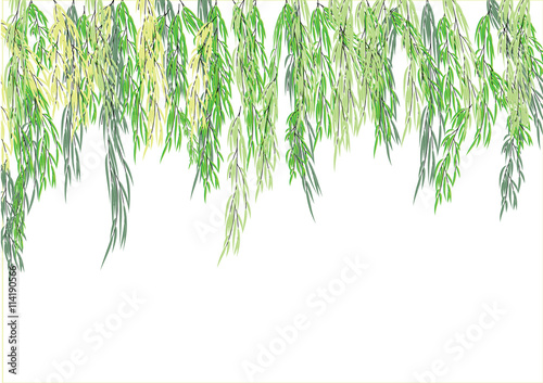 Tablou Canvas Willow tree branch,weeping tree for object or background,vector illustration