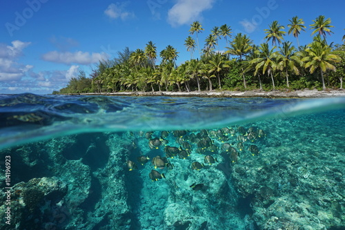 Staande foto Koraalriffen Above and below water surface, tropical shore with coconut trees and the reef with a shoal of fish underwater, Huahine island, Pacific ocean, French Polynesia