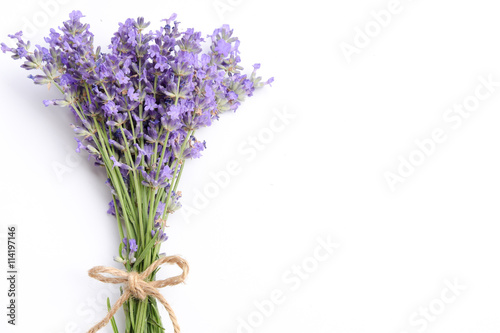 lavender on white background