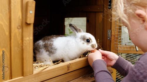 kleines Mädchen füttert hase