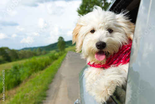 Photo  Dog enjoying a ride with the car