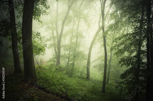 Keuken foto achterwand Olijf summer in green woods