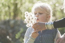 Blond Little Girl Blowing Seeds Of An Umbel Into The Air With Helping Hand Of Her Mother