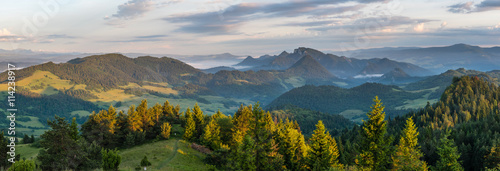 Photo Stands Road in forest Landscape in Pieniny