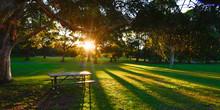 Beautiful Park In Sydney.