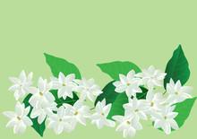 Jasmine Flowers,white Flower W...